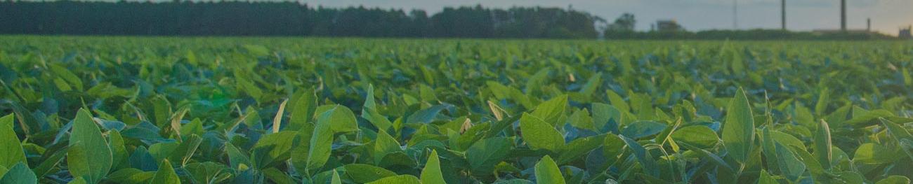 安心・安全な土壌